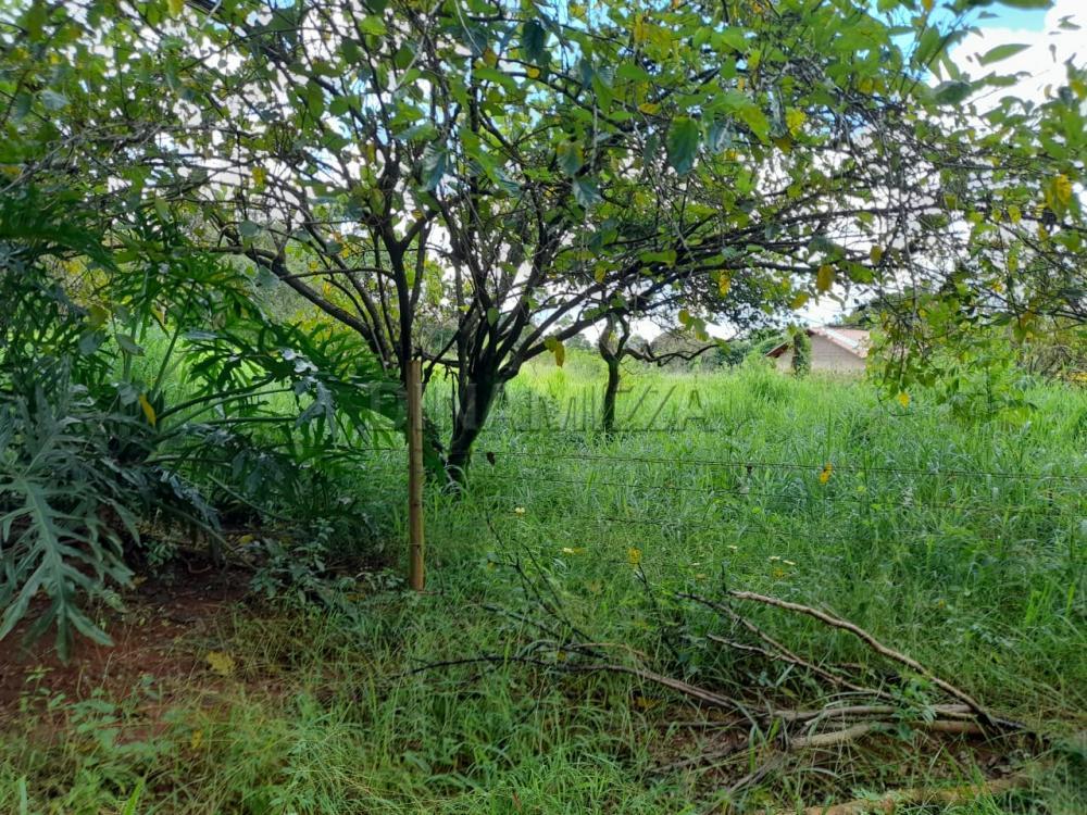 Comprar Rural / Chácara em Uberaba apenas R$ 250.000,00 - Foto 3